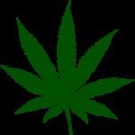 kotik-cannabis