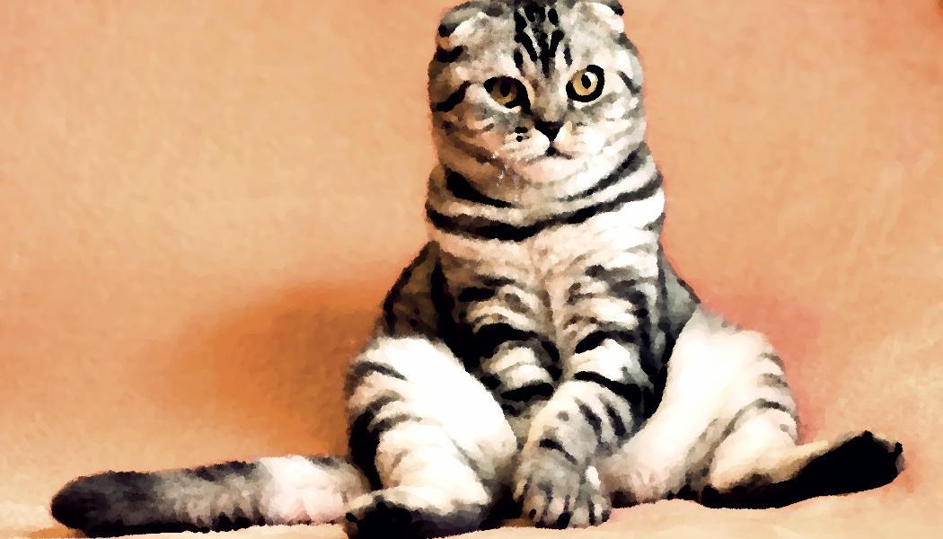 Katze - Gemälde - pelzblog