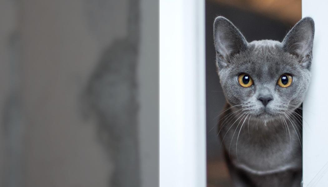 Katze - pelzblog